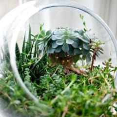 DIY Flower Food & Tips For Longer Lasting Flowers