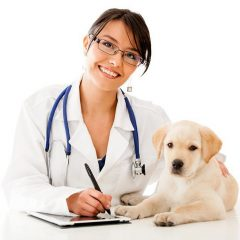 3 Things to Consider When Choosing the Right Vet